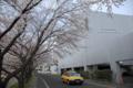 三光荘の桜/岡山市中区小橋にて
