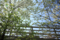 西川アイプラザの風景-花水木/岡山市北区幸町にて