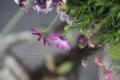 西川緑道公園-「花・緑ハーモニーフェスタin西川」/岡山市北区平和町