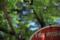 グランドの消火栓-葉桜/岡山市中区奥市にて