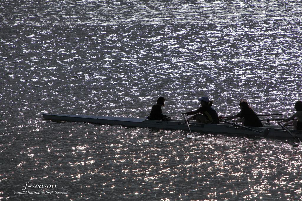 百間川の風景-漕艇/岡山市中区沖元にて