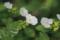 加茂山の風景-白い花/岡山市北区建部町田地子にて