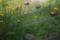 牛窓の公園-階段の花/瀬戸内市牛窓町牛窓にて