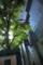 NTTクレド-陽ざしの樹/岡山市北区表町にて