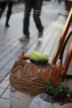 歩道の植木鉢/岡山市北区駅前町にて