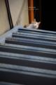 猫のいる階段/岡山市北区天神町にて