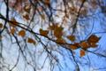 岡山市北区天神町の風景写真 - 残り葉