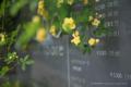 岡山市北区丸の内の風景写真 - 看板の花