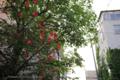 岡山市北区丸の内の風景写真 - 軒先の花