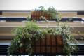 岡山市北区丸の内の風景写真 - 窓の植物