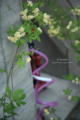 岡山市北区丸の内の風景写真 - 散水機