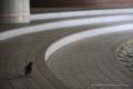 岡山市北区丸の内の風景写真 - 鳩