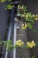 岡山市北区丸の内の風景写真 - 給水パイプの花
