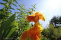 岡山市中区米田の風景写真 - 道端の花