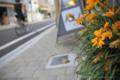 岡山市北区天神町の風景写真 - A flower in front of the store
