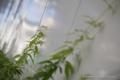 岡山市北区中山下の風景写真 - The plant of a wall