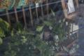 岡山市北区幸町の風景写真 - Foliage plant