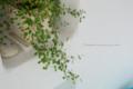 岡山市北区本町の風景写真 - Foliage plant