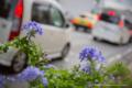 岡山市北区東島田町の風景写真 - The flower of a sidewalk