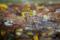 岡山市北区丸の内の風景写真 - 落ち葉