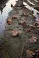 岡山市中区沖元の風景写真 - Lotus root