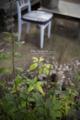 岡山市中区さくら住座の風景写真 - The plant of a flower bed