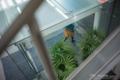 岡山市北区駅元町の風景写真 - The foliage plant of an entrance
