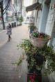 岡山市北区石関町の風景写真 - The flowerpot of a street corner