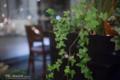 岡山市北区駅元町の風景写真 - A foliage plant and a chair