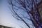 岡山市北区内山下の風景写真 - Trees of twilight