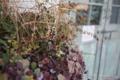 岡山市北区田中の風景写真 - The withered plant