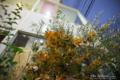 岡山市北区幸町の風景写真 - Potted plant