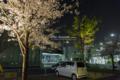 岡山市北区内山下の風景写真 - Nocturnal view of cherry blossoms