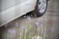 岡山市北区東島田町の風景写真 - Flower blooming in the parking lot