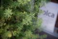 岡山市北区田町の風景写真 - Foliage plant