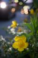 岡山市北区駅元町の風景写真 - The flower of a sidewalk