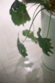岡山市北区駅元町の風景写真 - Foliage plant