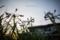 岡山市中区江並の風景写真 - Flower of dusk