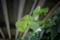 岡山市中区新築港の風景写真 - Leaf