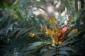 岡山市北区丸の内の風景写真 - Flower of implantation