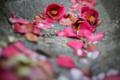 赤磐市中島の風景写真 - Camellia