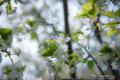 岡山市中区新築港の風景写真 - The flower of a cherry tree