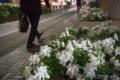 岡山市北区幸町の風景写真 - Rhododendron
