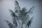 岡山市北区下石井の風景写真 - Foliage plant