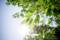 岡山市中区新築港の風景写真 - Sunlight