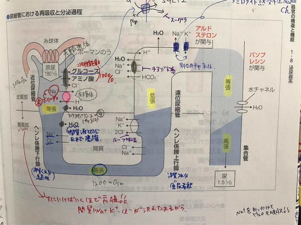 f:id:FMyakuzaishi:20180430215621j:image