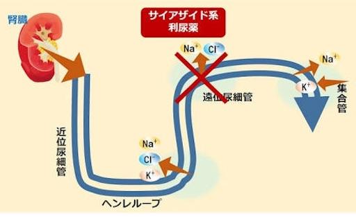 f:id:FMyakuzaishi:20180528012303j:image