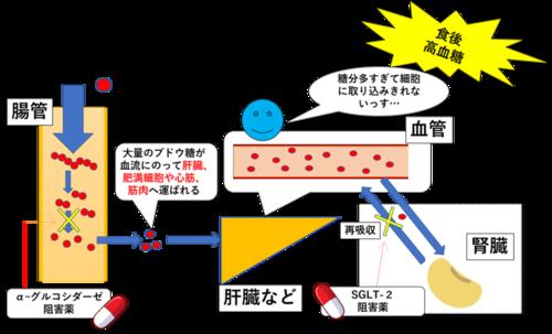 f:id:FMyakuzaishi:20191221134857p:plain