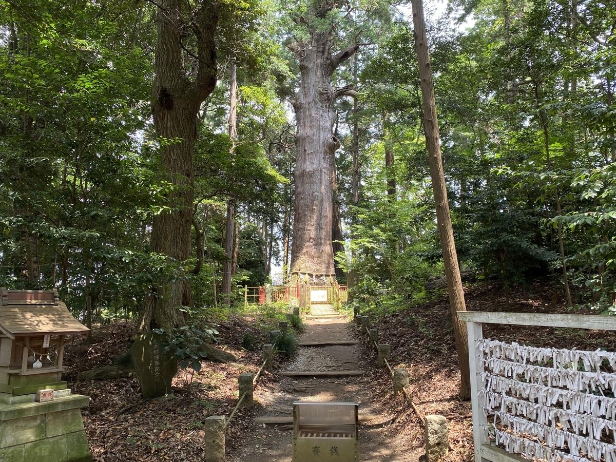 麻賀多神社 / 御神木