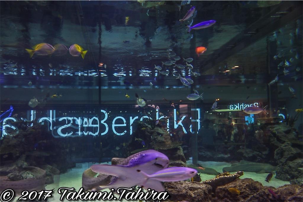 f:id:FantasyWorld:20170730180423j:image